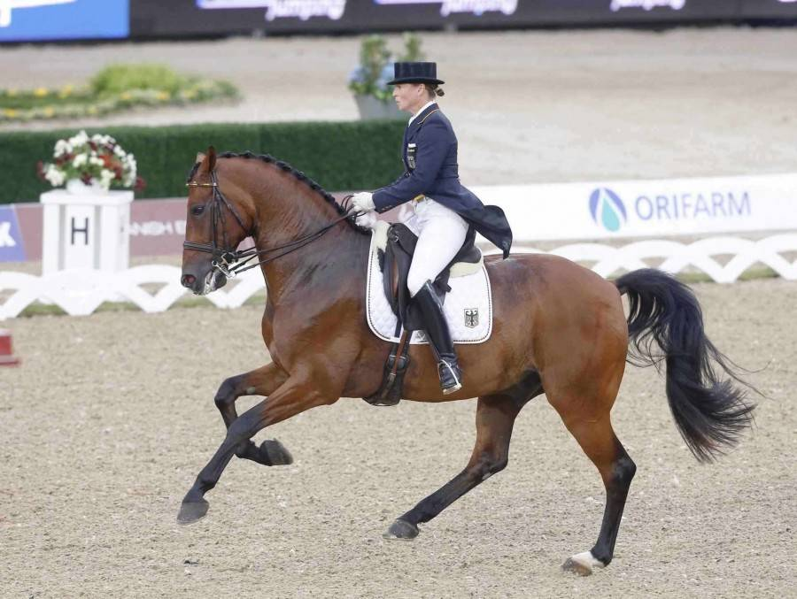 EQUITATION Championnat d Europe beIN SPORTS